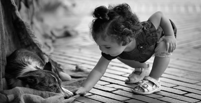 empatia pies dziecko